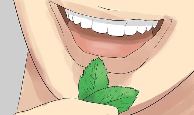 جویدن برگ نعنا برای خوشبو کردن دهان